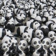 panda bear von ralf seybold